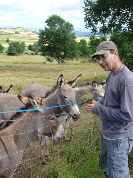 Herman overweegt om toch een ezel mee op pad te nemen